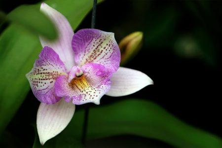 Orchidée sauvage : Tour du monde des orchidées sauvages